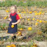 Pumpkin-Patching