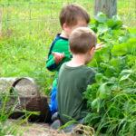 The Garden Bounty