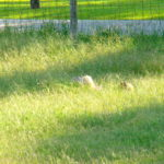 Tips For Mowing Grass