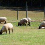 The Flock's Playground
