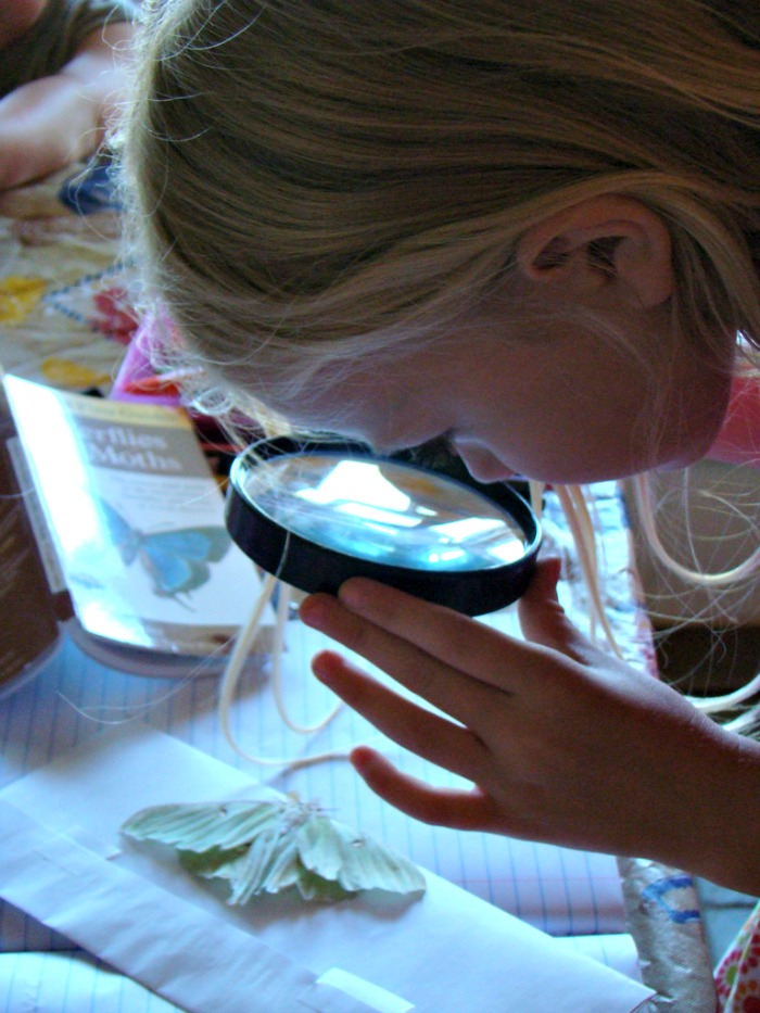 """The Ladybug really gets into scientific investigation. She asked for her magnifying glass a few months ago when we put the new desk in her room because she was """"doing observations"""" on leaves and seeds."""