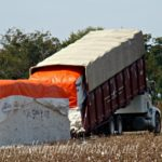 Picking Cotton and Loading Bales