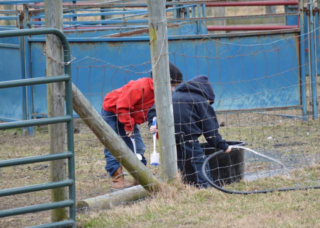 winter farm chores 5