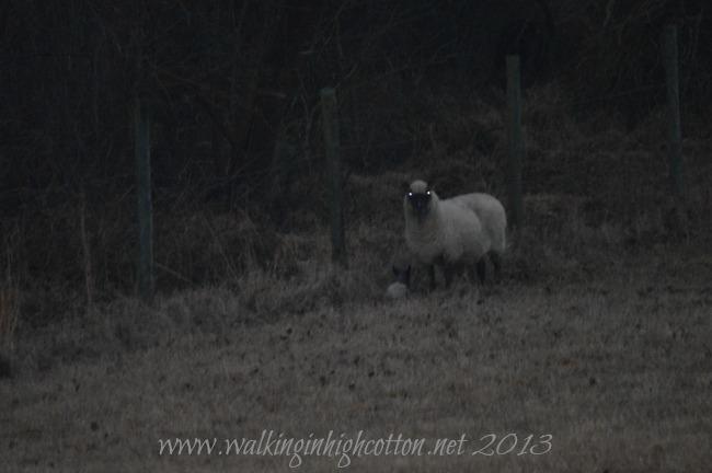 first lamb 2