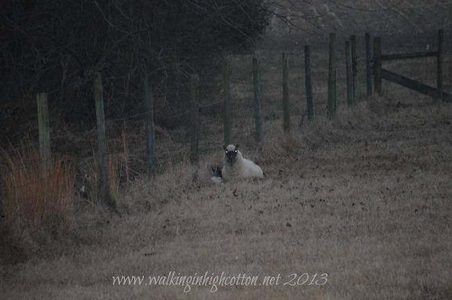 first lamb 3