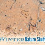 Winter Nature Study Ideas