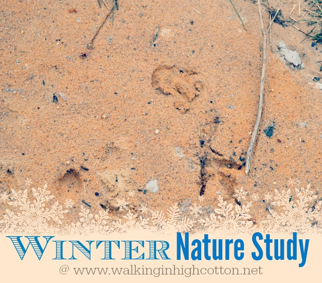 Winter Nature Study Ideas {via Walking in High Cotton}