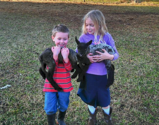farm updates 4