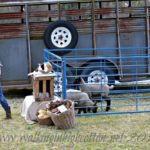 Teaching Children to Be Good Animal Visitors