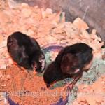 Two Freebie Chicks…