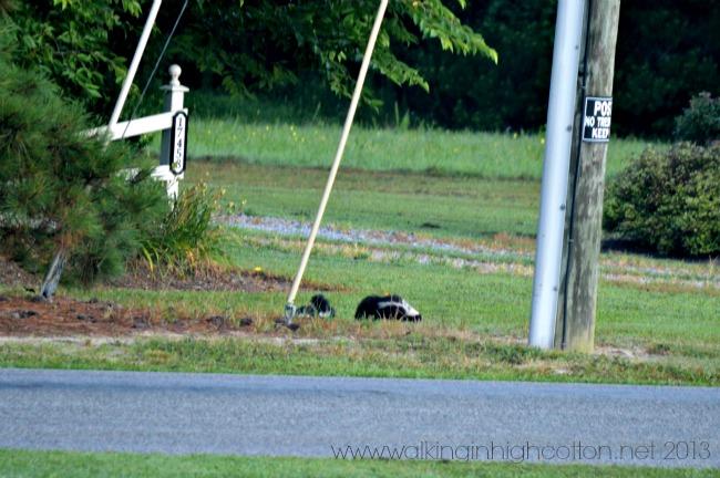 skunks 1