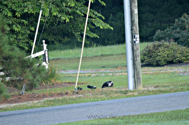 skunks 3