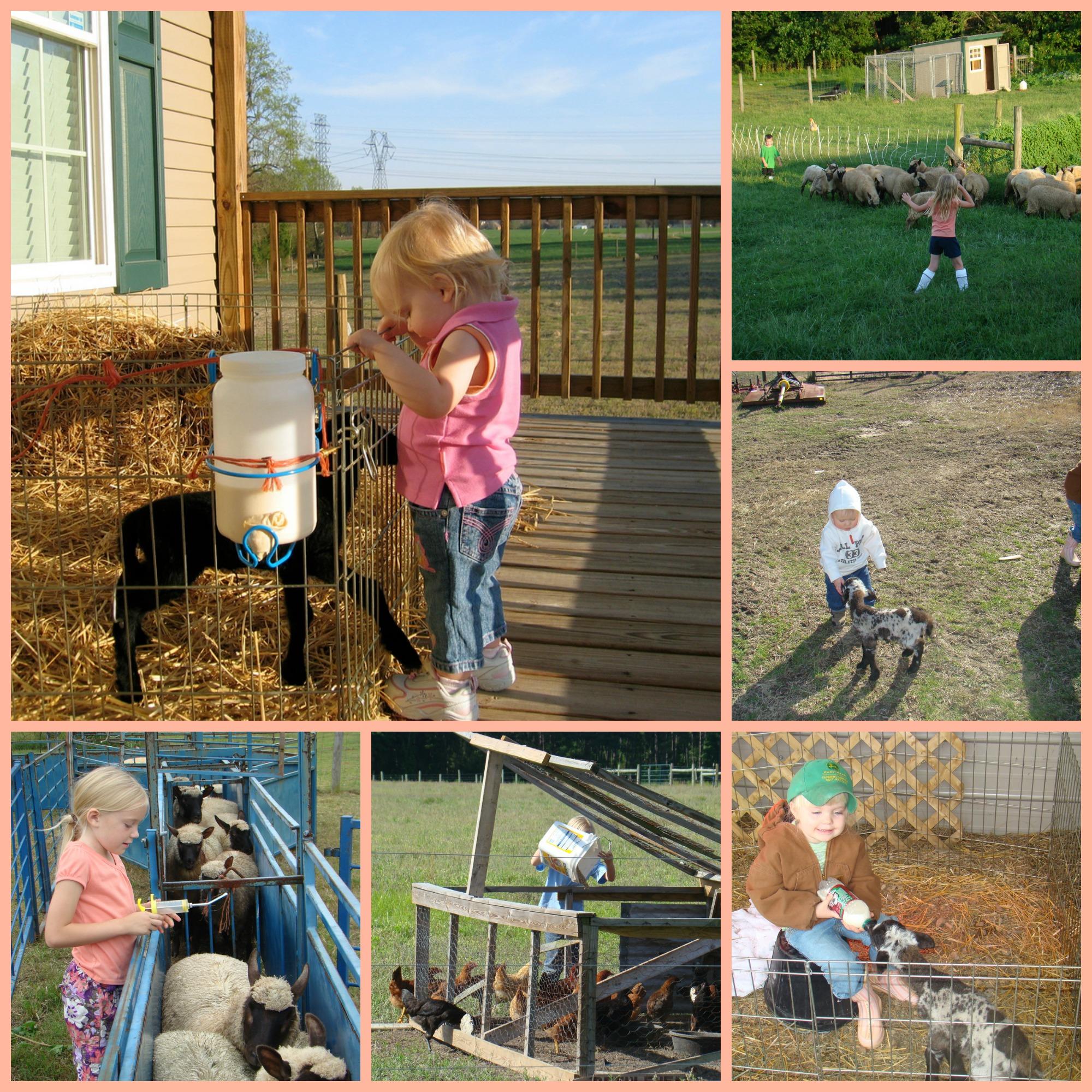 farm kids with farm animals