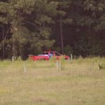 Bulls by the Road…and Other Daily Adventures
