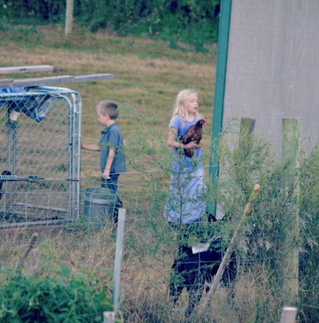 chasing chickens 4