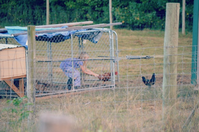 chasing chickens 6