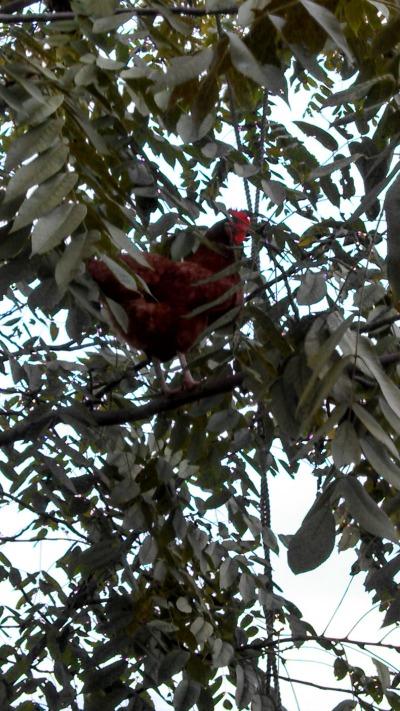 2013 tree chicken