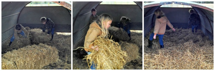 The cow shed was a little easier. Just rake out the piles and spread out some clean straw.