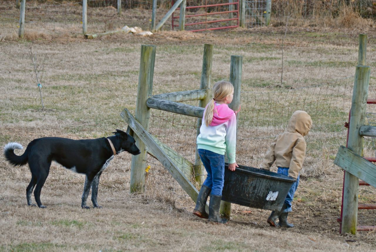 Don't think the Cowboy was the only one working. {smile} The Ladybug and Speedracer were out there too. With Penny supervising, of course.