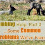 Lambing Help Part 2…Common Problems {Hard Labor}