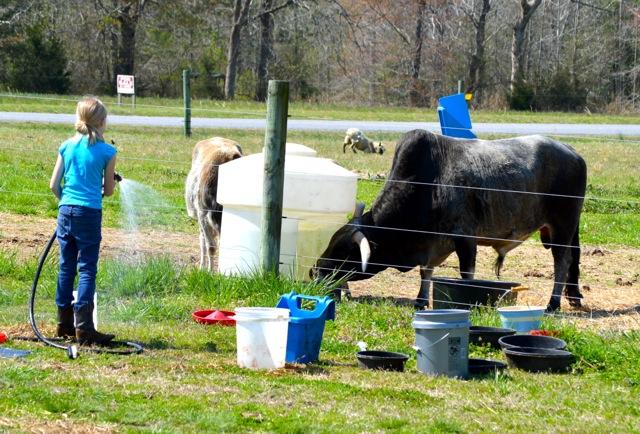 spring chores 3