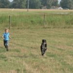 Farm Dogs and Egg-Eating Skunks…the Daily Farm Adventures {56}
