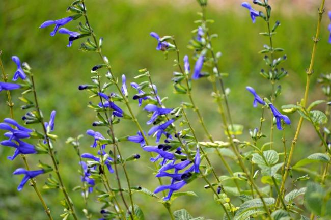 butterfly flowers 1
