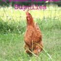 The 5 Basic Chicken Supplies we use every day. {via www.walkinginhighcotton.net}