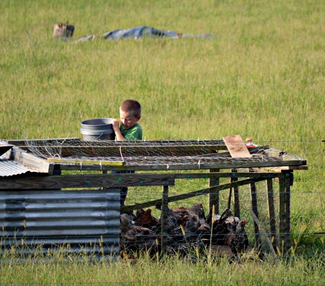 chicken chores 1