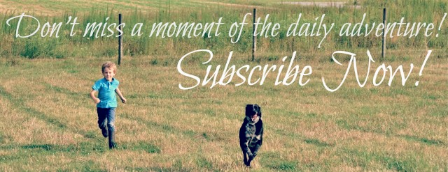 farm dog subscribe now 1