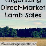 Organizing Direct-Market Lamb Sales…the Daily Farm Adventures {72}