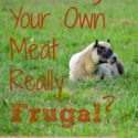 """Is raising your own meat really """"frugal""""? Not really, but it can at least be affordable. Some thoughts on REAL costs of raising livestock. {via Walking in High Cotton}"""
