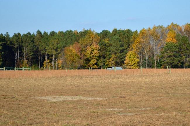 small farm -- land 4