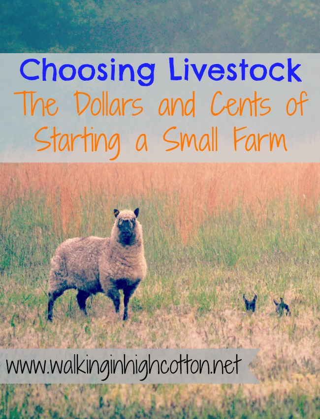 Choosing Livestock...the Dollars and Cents of Starting a Small Farm {extensive series at Walking in High Cotton)