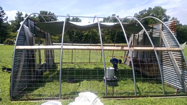 chicken hoop house 01