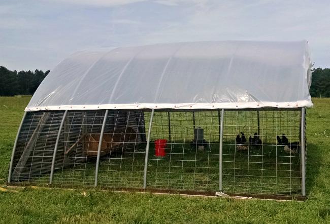 chicken hoop house 04