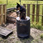 The Roof Incident…Life with Coal the Cattle Dog