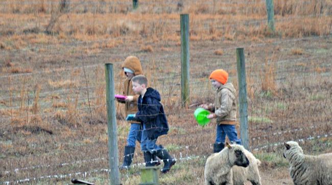 new lambs 2016 06