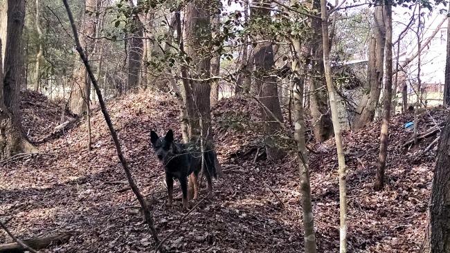 walking in the woods 03
