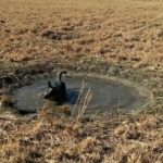 Cattle Dogs, Sink Holes, and Sunny Weather…the Daily Farm Adventures {107}