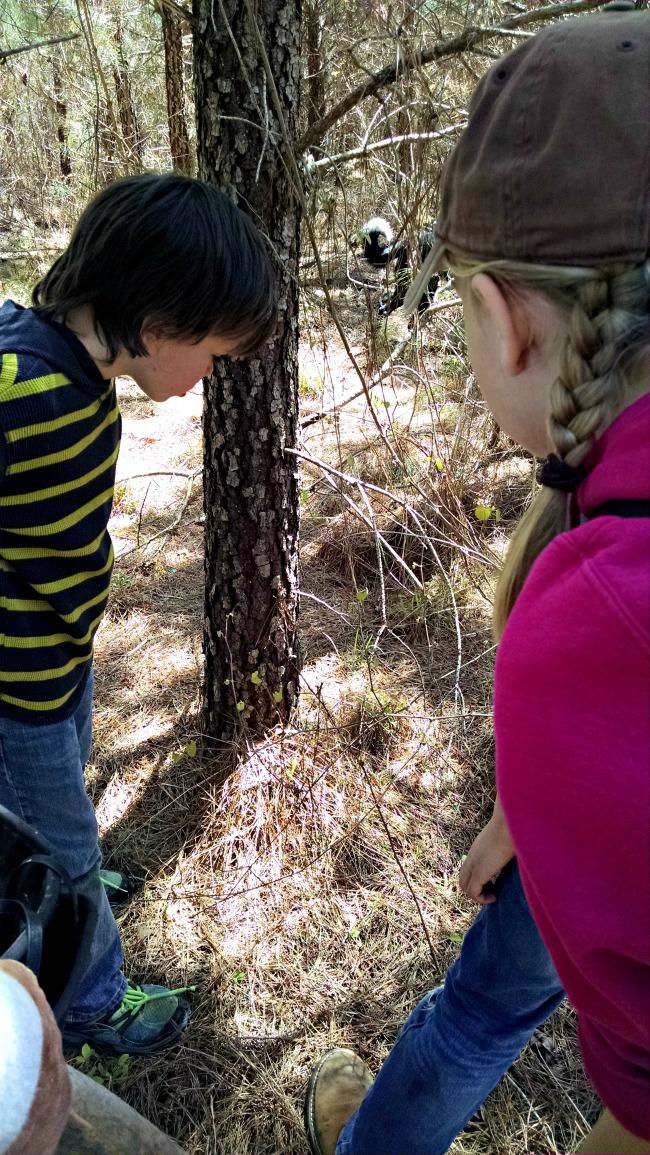 beaver hunting 13