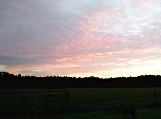 pasture walking 03