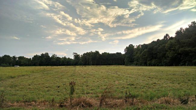 pasture walking 07