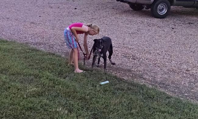 washing dogs 01