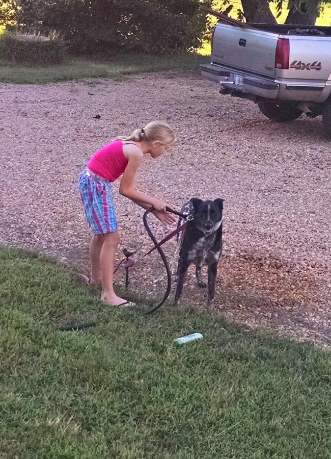 washing dogs 02