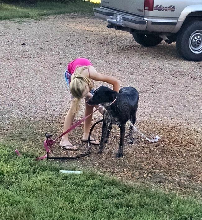 washing dogs 03