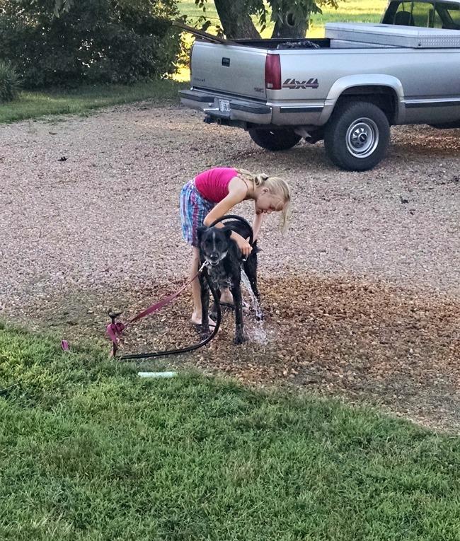 washing dogs 04