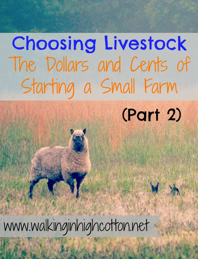 choosing-livestock-the-dollars-and-cents-of-starting-a-small-farm-part2