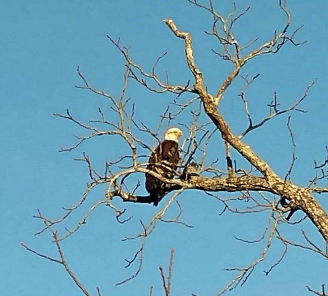 bald eagle encounters