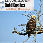 Bald Eagle Encounters…Bald Eagle Study Resources